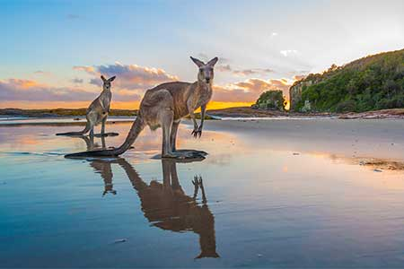 Sunrise Kangaroos At Diamond Head By Matt Cramer