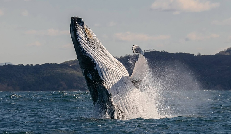 Whale Watching Joy By Jodie Lowe
