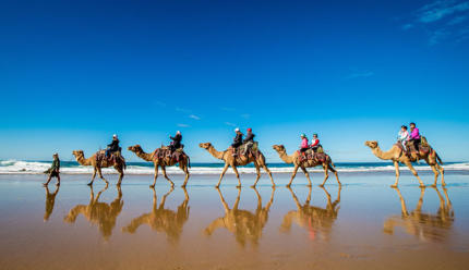 Camel Surfing On Lighthouse Beach By Lindsay Moller